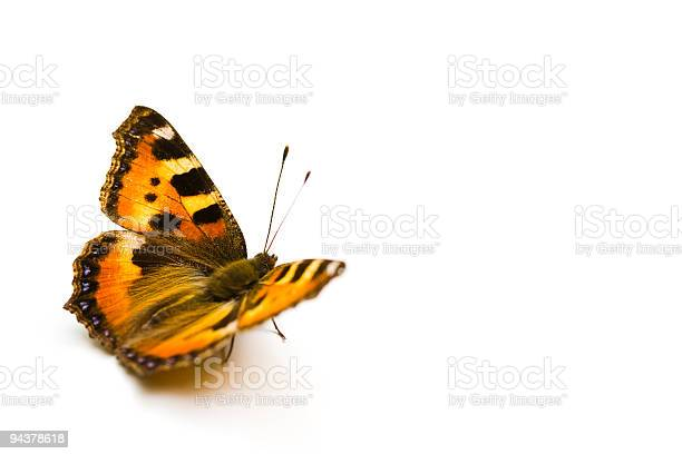 Butterfly picture id94378618?b=1&k=6&m=94378618&s=612x612&h=uq0ymrfl o34iwb0 ptfygfhdqcvugeb77oluenz f4=