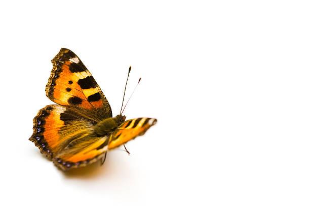 Butterfly picture id94378618?b=1&k=6&m=94378618&s=612x612&w=0&h=insyakucx0thedmwv3umnxx309tihz9oy2peqzau ik=