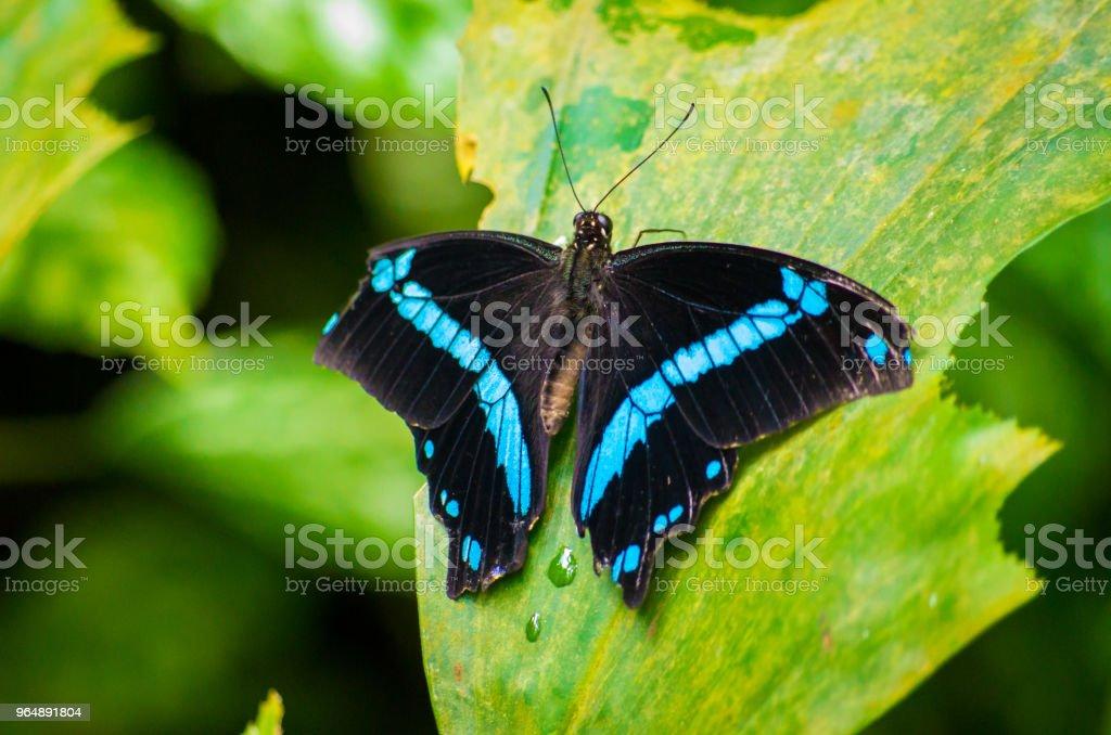 蝴蝶 - 免版稅一隻動物圖庫照片