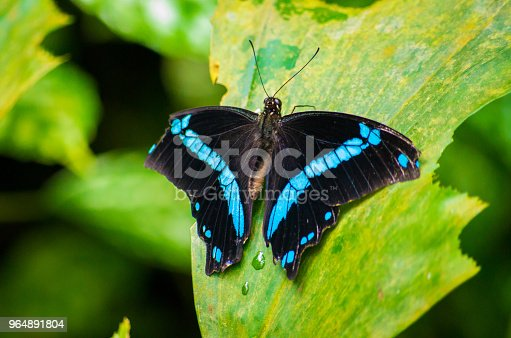 999676880 istock photo butterfly 964891804