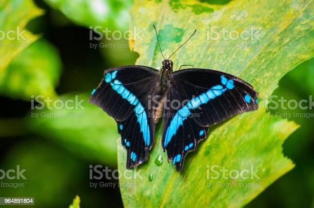蝴蝶 照片檔及更多 一隻動物 照片