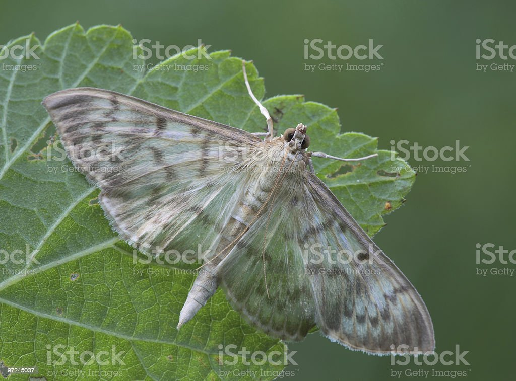 Butterfly. royalty-free stock photo