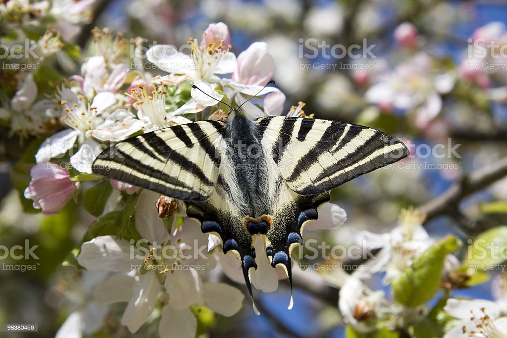 Butterfly royalty-free stock photo