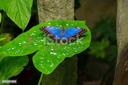 999676880 istock photo butterfly 990990888