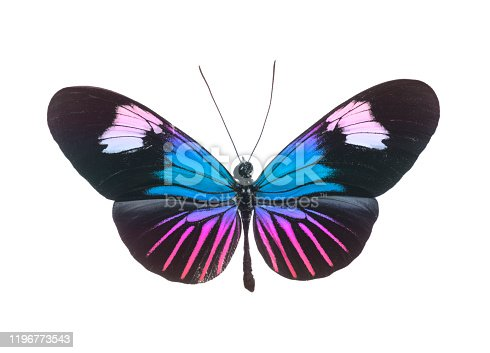 Pink and Blue Butterfly Isolated On White
