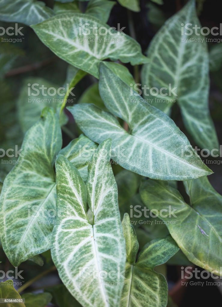 Butterfly plant stock photo