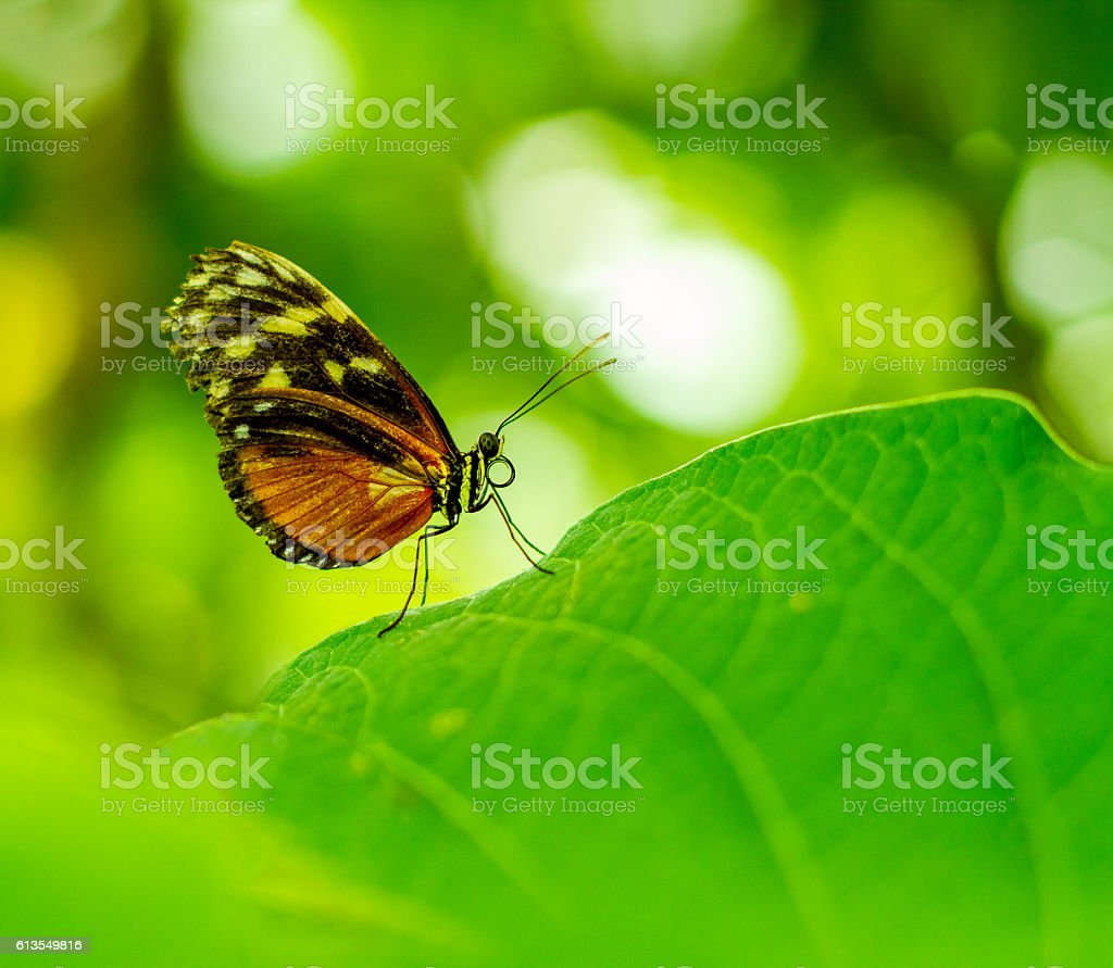 Butterfly portrait with bokeh blurred stock photo