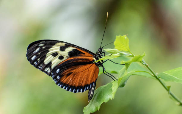 Butterfly profile stock photo