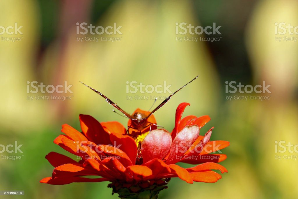 Butterfly Ready to Take Off stock photo