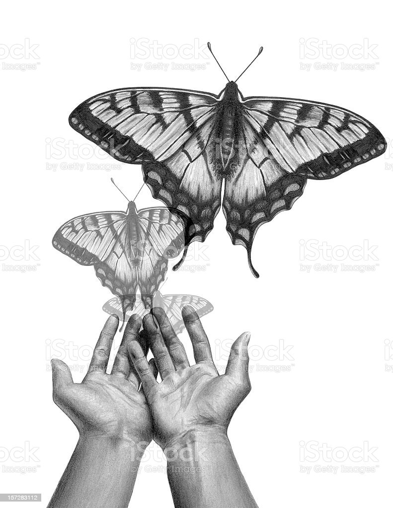 Butterfly Release royalty-free stock photo