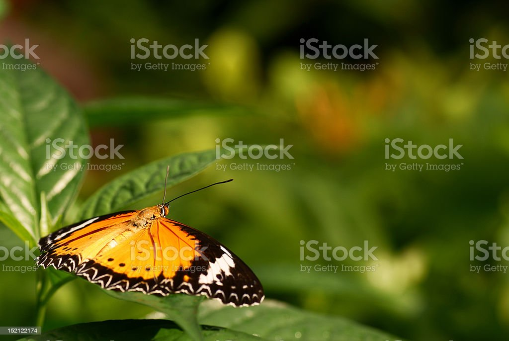 Butterfly resting on a leaf royalty-free stock photo