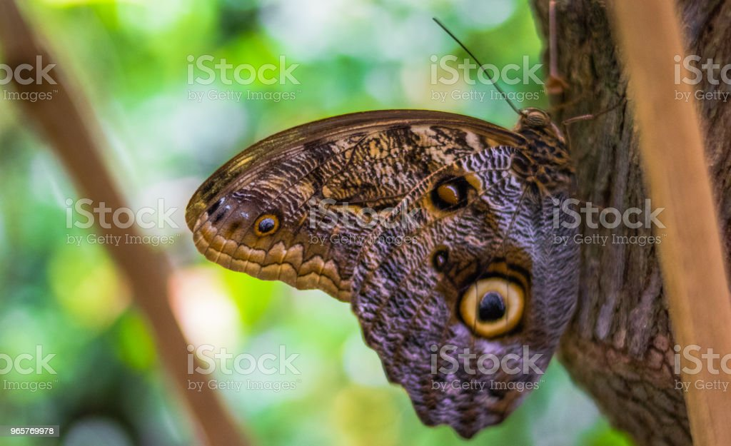 Butterfly Resting on a Tree - Стоковые фото Бабочка роялти-фри