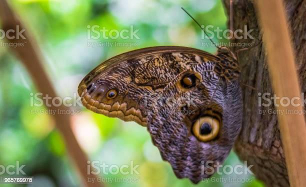 Бабочка Отдыхающая На Дереве — стоковые фотографии и другие картинки Бабочка