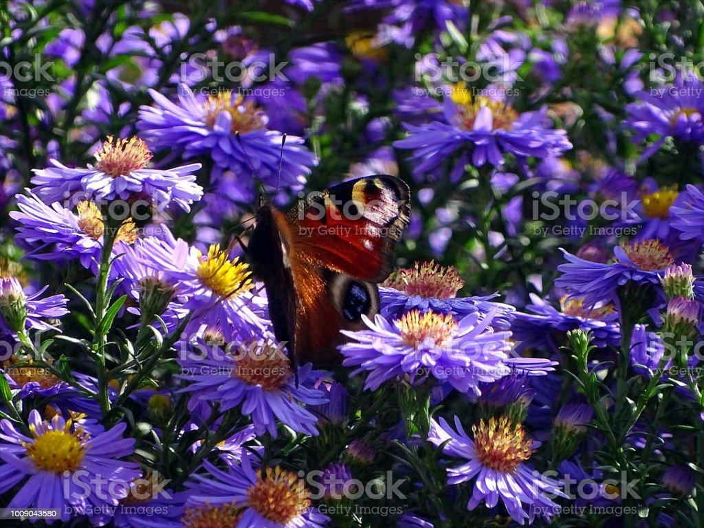 Schmetterling Ruht Auf Blume – Foto
