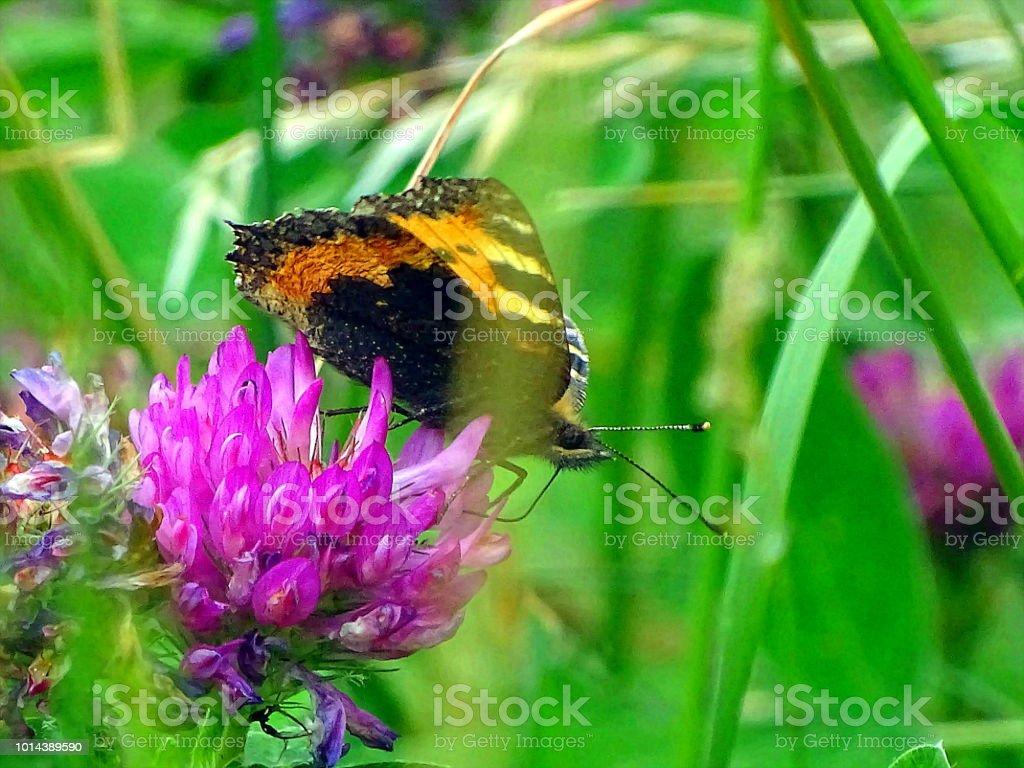 Schmetterling Ruht Sich aus – Foto