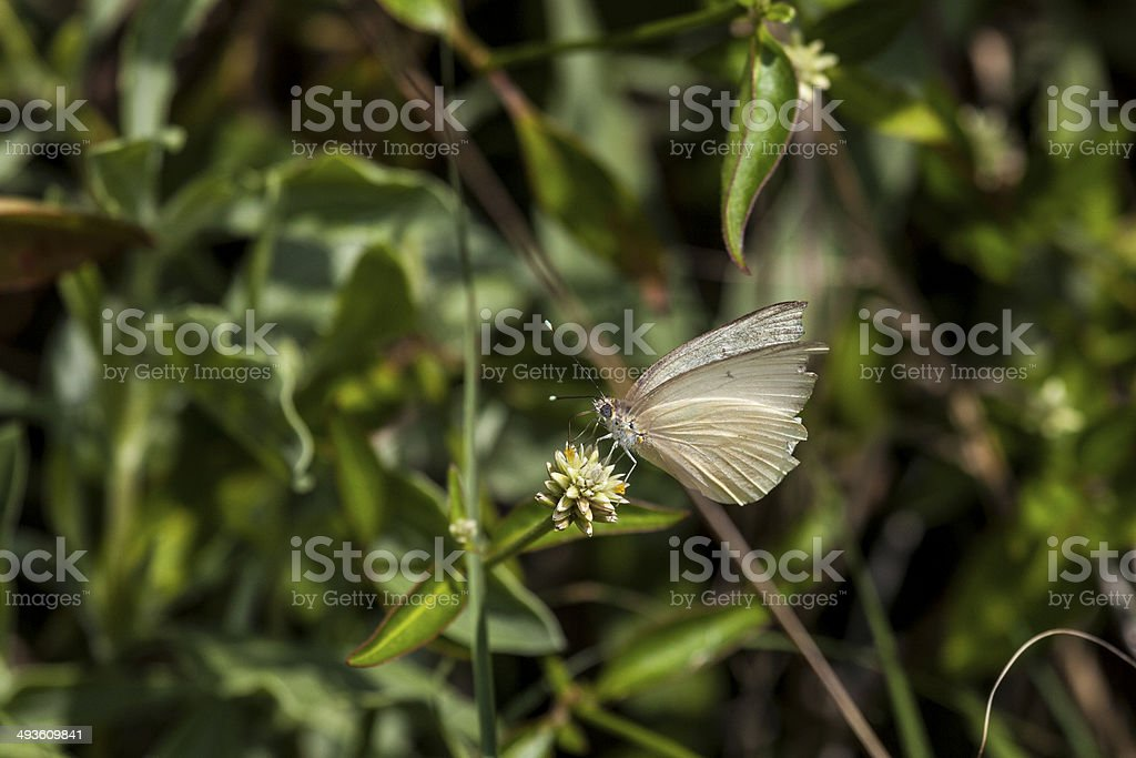 Butterfly seen at Everglades stock photo