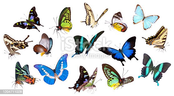 Colorful Butterfly Set Isolated On White