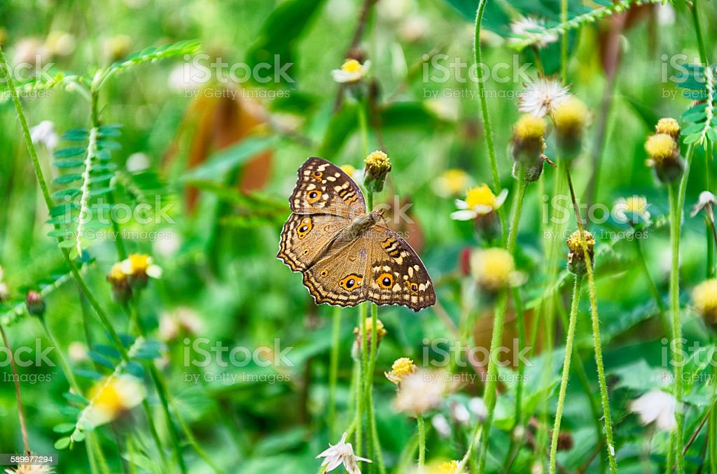 Butterfly Shows Her Wings stock photo