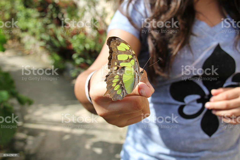 Butterfly siting on female fingers stock photo