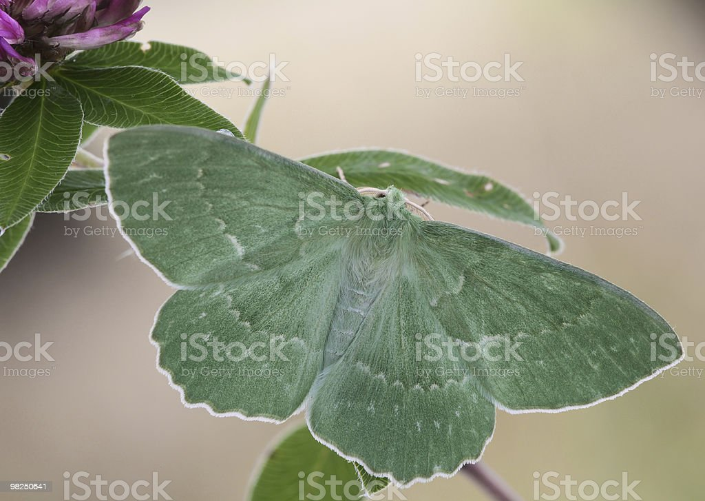 Butterfly sits on a branch. royalty-free stock photo