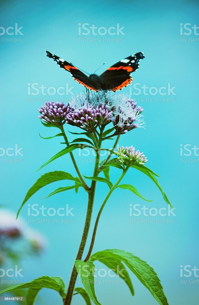 Butterfly sits on beautiful pink flower stock photo