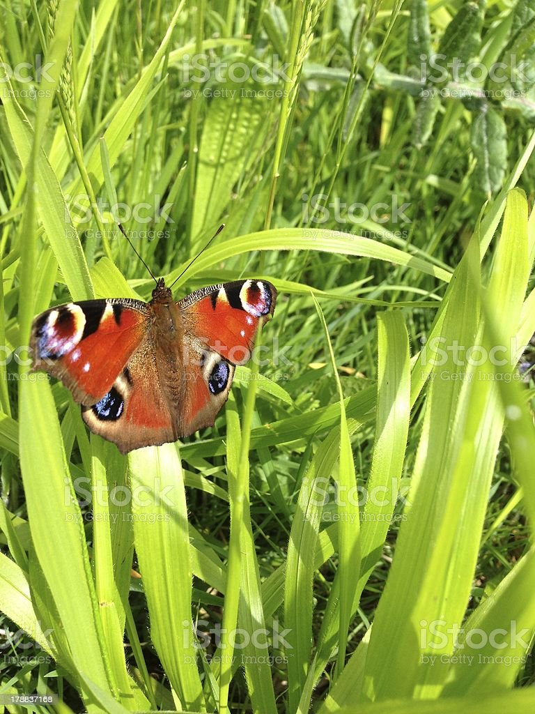 Butterfly sitting in lush green grass stock photo