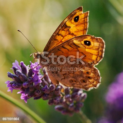 Butterfly sitting in the wild flower field in summer