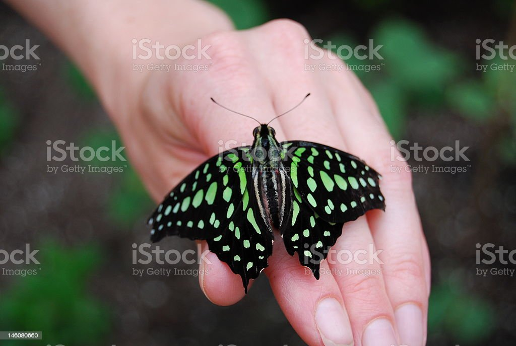 Butterfly sitting on a hand stock photo