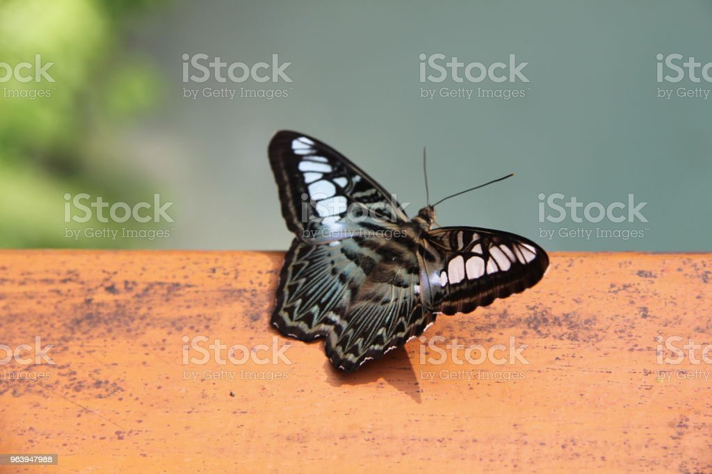 A butterfly sitting on a wooden balustrade - Royalty-free Animal Stock Photo