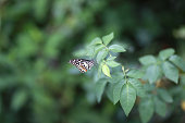 Beautiful buterfly in the garden. soft focus
