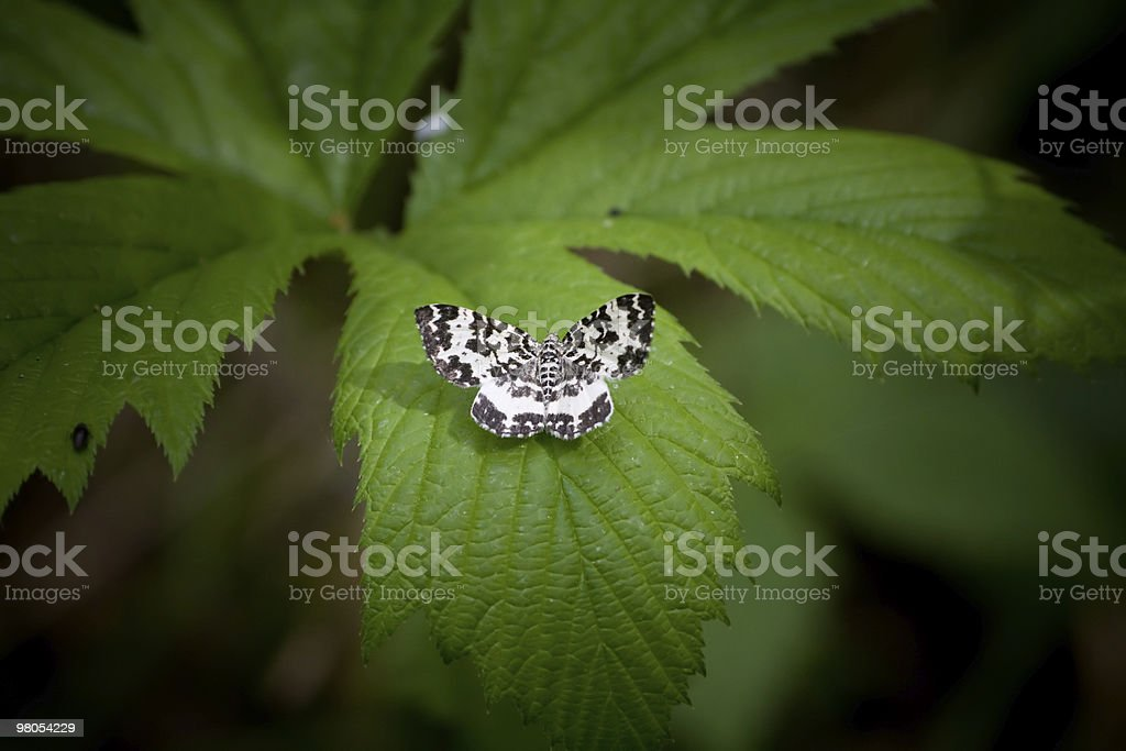 butterfly sitting on the leaf royalty-free stock photo