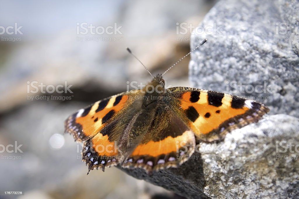 Butterfly sitting on the rock royalty-free stock photo