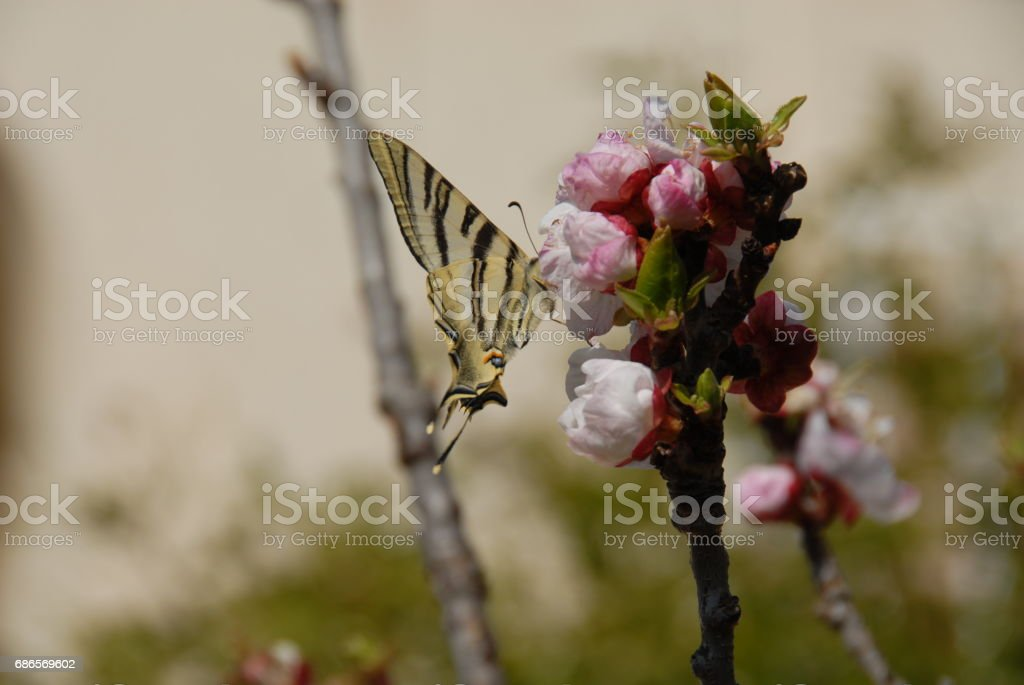 Schmetterling - Spanien photo libre de droits