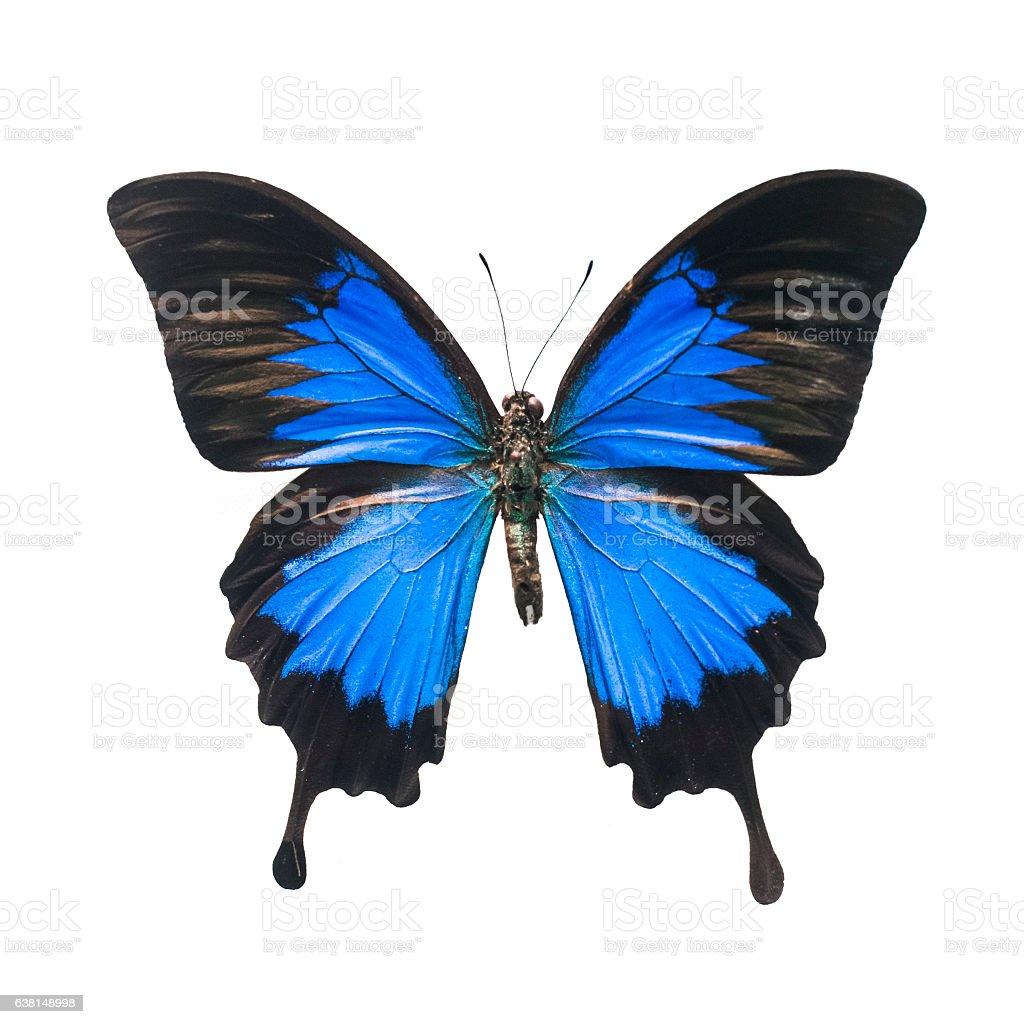 butterfly specimen stock photo