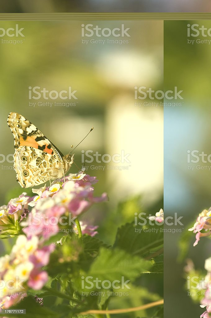 Butterfly standing on a plant royalty-free stock photo