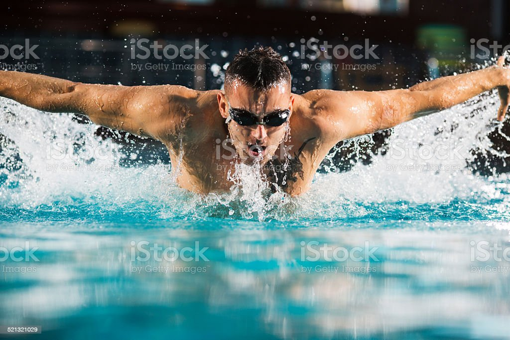 Butterfly swimming. stock photo