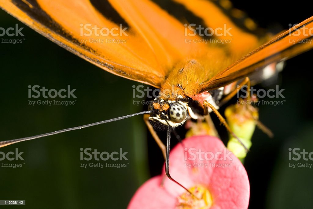 Butterfly taking nectar from a flower stock photo