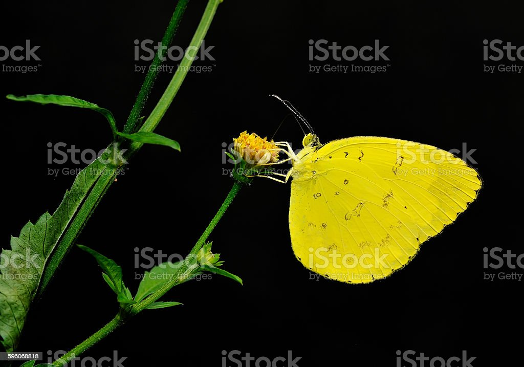 Butterfly , Thailand royalty-free stock photo