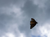 Butterfly Trapped in a Spider Web