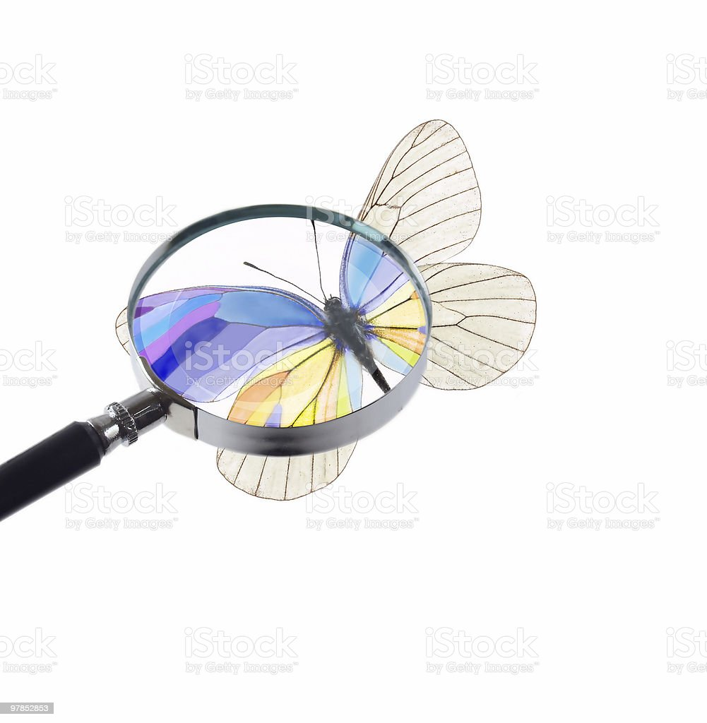 butterfly under magnifying glass stock photo
