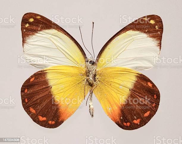 Butterfly underside picture id147004308?b=1&k=6&m=147004308&s=612x612&h=prtxg66q2tpthrmpuhgyixqnp66tj k zscaboxgrfw=