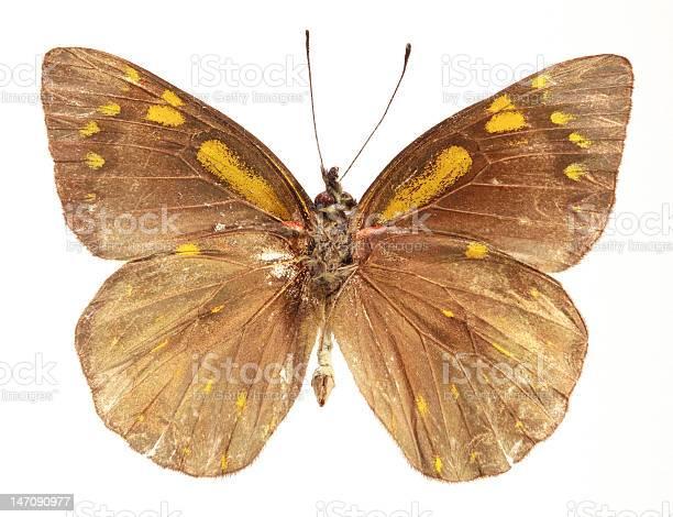 Butterfly underside picture id147090977?b=1&k=6&m=147090977&s=612x612&h=bxuetplzwvftp7jvs0qdluytt4dg2ptdrd48bzvtu9y=