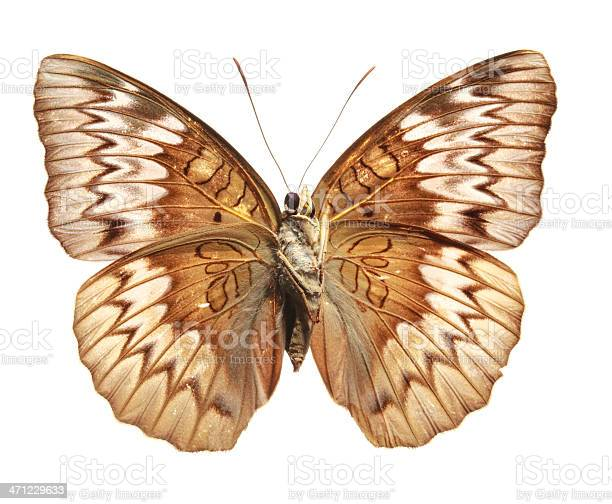Butterfly underside picture id471229633?b=1&k=6&m=471229633&s=612x612&h=bxgmcz0brd44n8ftkml29aeozguopfxedzgujyuzcl4=