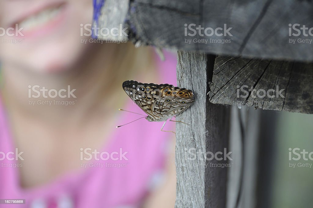 Butterfly Watcher stock photo