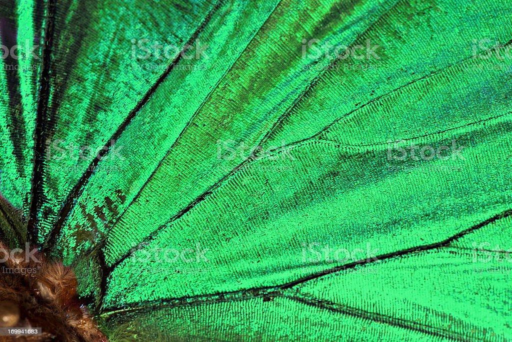 Butterfly wing background :Malachite stock photo