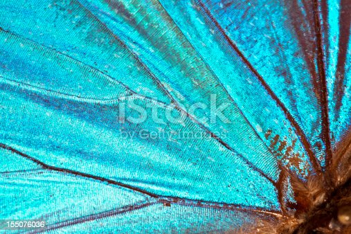 istock Butterfly wing background 155076036