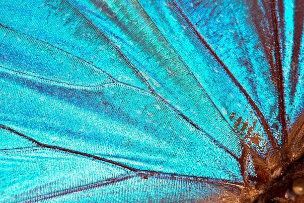 Butterfly wing background picture id155076036?b=1&k=6&m=155076036&s=612x612&w=0&h=zgsdj7rmgzcwlge67wiu7lomryc9vmwtihvsn 7tcyy=