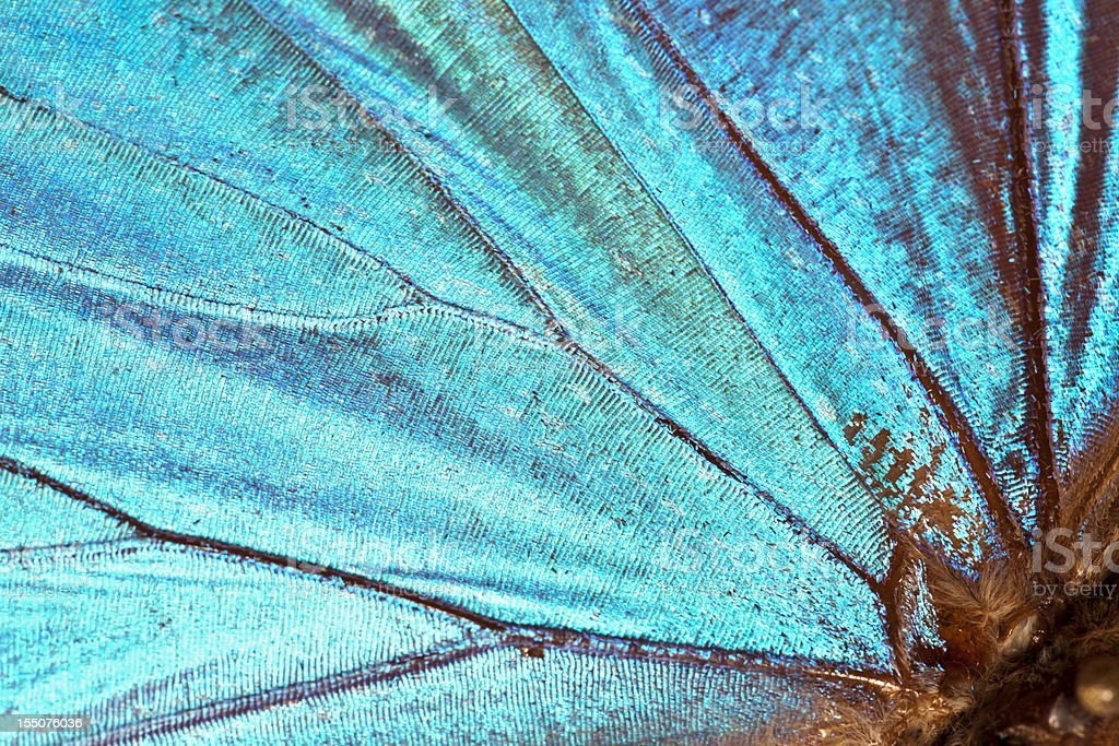 Butterfly wing background stock photo