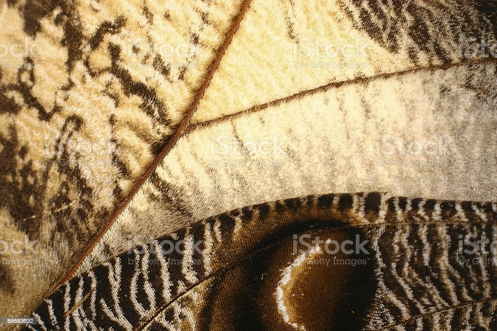 Butterfly wing pattern royalty-free stock photo