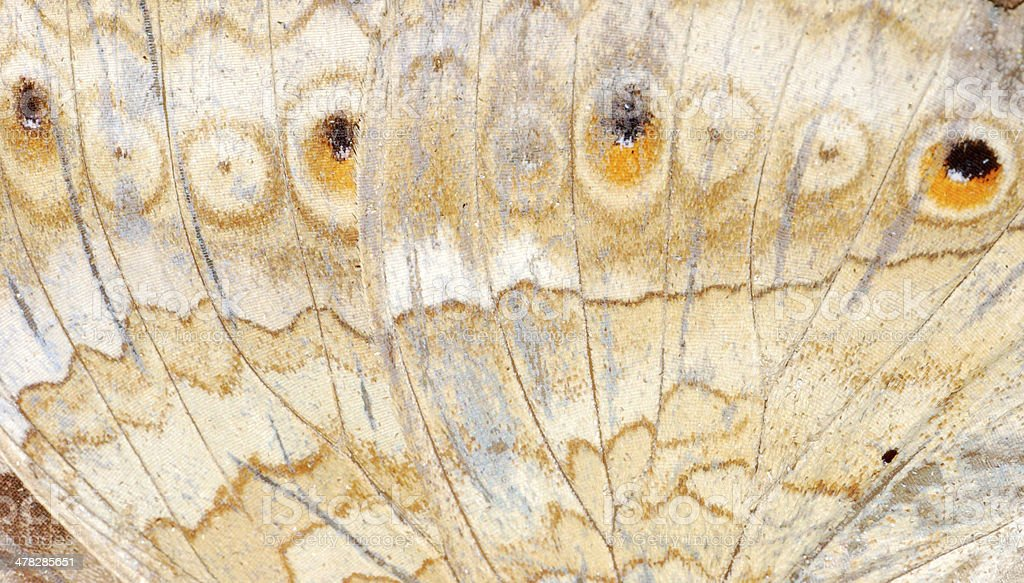 butterfly wing  pattern texture royalty-free stock photo
